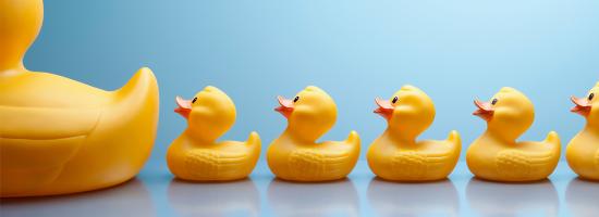 Une rangée de canards jaunes en caoutchouc