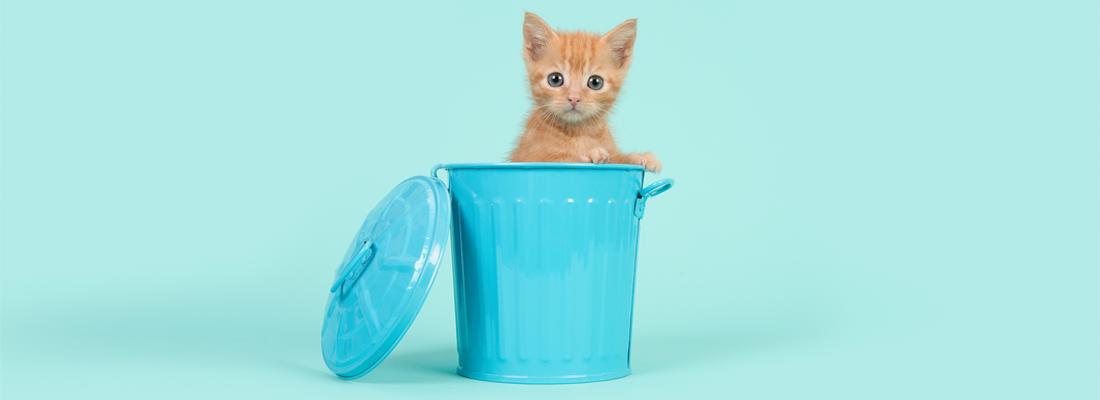 A cute cat in a tiny blue dustbin